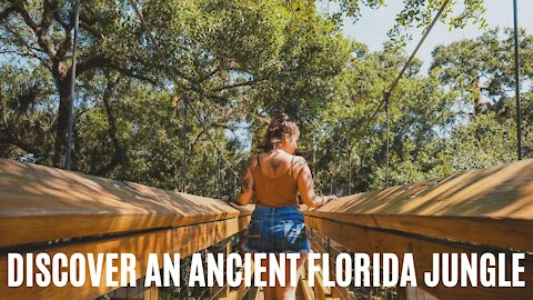 This Easy Hike Near Tampa Is Like Exploring An Ancient Jungle Realm