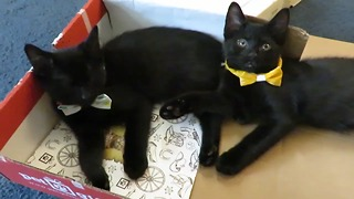 Top reasons to adopt a black cat - Video
