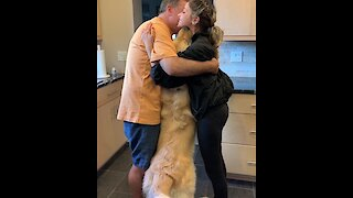 Super jealous Golden Retriever needs to be part of all hugs