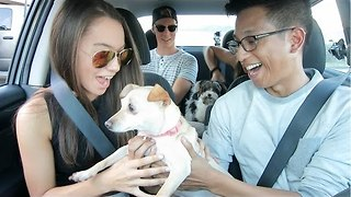 Uber Driver Surprises Passengers With Puppies - Video