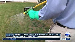 Ways to battle weeds in your garden and lawn - Video