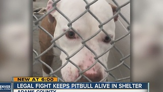 Legal fight keeps pitbull alive in shelter - Video