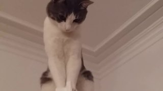 Cat chooses to relax in fairly unique location - Video
