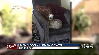 Henderson man warns neighbors of coyote attack - Video