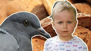ADORABLE 2-Year-Old Feeds Pigeons at the Fountain