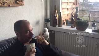 Eager Cockatoo Just Wants a Cup of Tea - Video