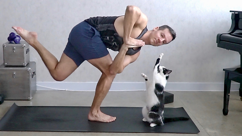 Cats repeatedly interrupt owner's yoga session