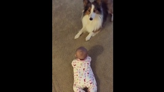 Clever Dog Adorably Teaches Baby How To Roll Over - Video