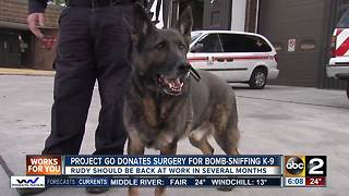 Vet performs free surgery on bomb-sniffing K9 - Video