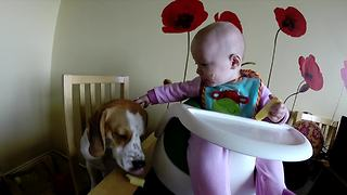 Baby shares food with dog, gets angry when he refuses it