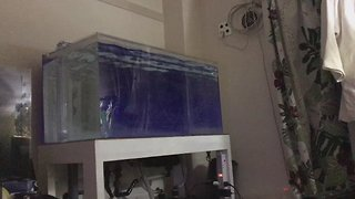 Fish Tank Shakes as Earthquake Felt in Tokyo - Video