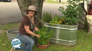Lark Foster's Tips on Container Gardening - Video