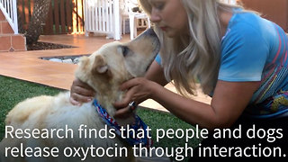 Do you love dogs? Here's why your four legged friend is your best friend - Video