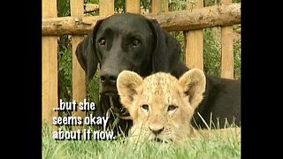 Dog Adopts Lion - Video