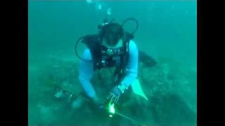 Spear Fisherman Gets Stung by Lionfish - Video