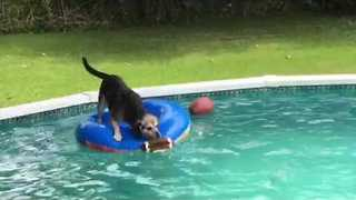 Clever Dog Uses Raft to Retrieve Ball - Video