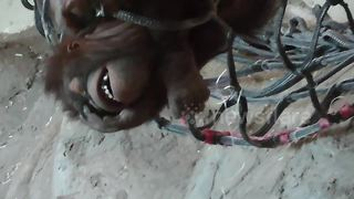 Playful orangutan youngster gets tangled up - Video