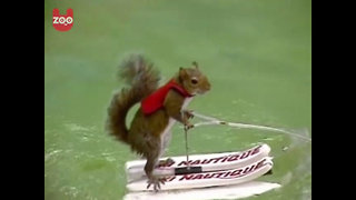 Waterskiing Squirrel