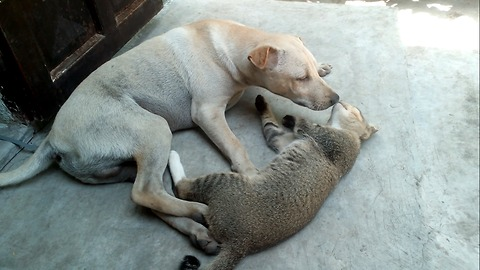 Love of dog and cat