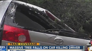 Massive tree falls on car, killing driver - Video