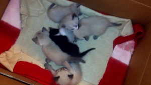 3-week-old kittens playing adorably - Video