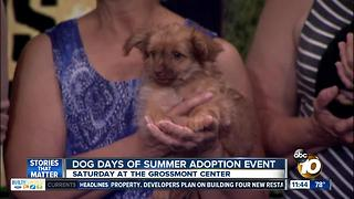 Find a pet at the Dog Days of Summer Mega Adoption Event - Video