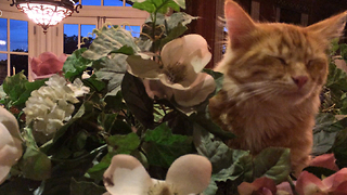 Funny Jack the cat hides in the flower bowl - Video