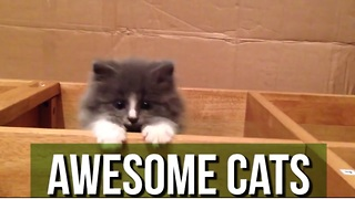 This Compilation Of Awesome Cats Just Proves Why They OWN The Internet! - Video