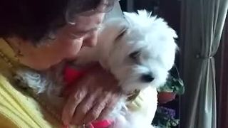 Emotional 90-Year-Old Grandmother Has Priceless Reaction To Puppy Surprise  - Video