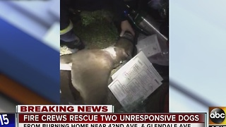 Two dogs rescued from house fire, Fido bags used - Video