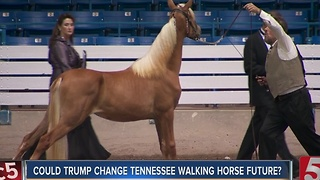 USDA Bans Tools Used In Tennessee Walking Horse Industry - Video