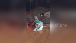 Very patient dog lets baby 'twerk' on his back - Video