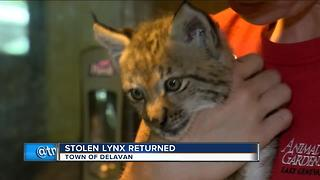 Petting zoo owners relieved baby lynx returned