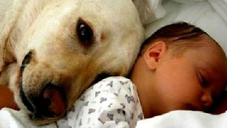 Cats and dogs meeting babies for the first time - Cute animal compilation - Video