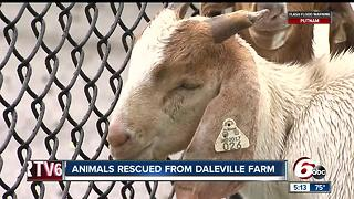 Nearly 100 Daleville animals removed from farm due to poor living conditions - Video