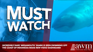 Incredibly rare 'megamouth' shark is seen swimming off the coast of Indonesia - Video