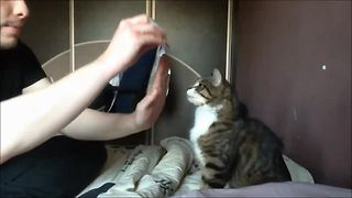 Kitten learns how to pull off 'high-five' trick - Video