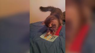 Angry Feline Goes After A Musical Birthday Card