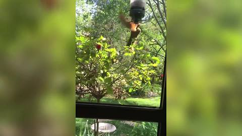 """Funny Squirrel Spins Around a Bird Feeder"""