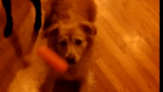 Dogs catch carrots in SLOW MOTION!  - Video