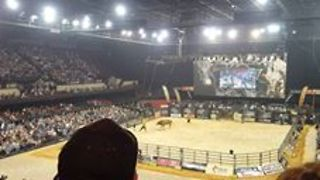 Bull Euthanased After Breaking Leg During Adelaide Rodeo - Video