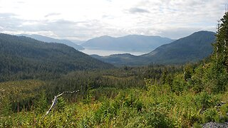 Judge Pauses Timber Sale In Alaska's Tongass National Forest