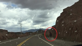 Wild horse gallops alongside highway