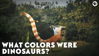 What Colors Were Dinosaurs?