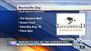 Marinelife Day at The Gardens Mall on Aug. 19 - Video
