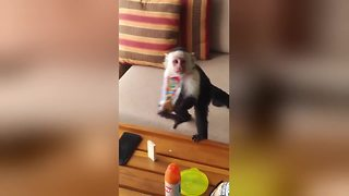 Cheeky Monkeys Sneak Into Family's Hotel Room To Steal Their Snacks