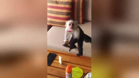 Cheeky monkeys sneak into hotel to steal tourists snacks