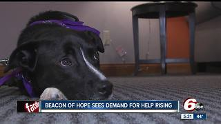 Beacon of Hope Crisis Center adds trauma therapy dog - Video
