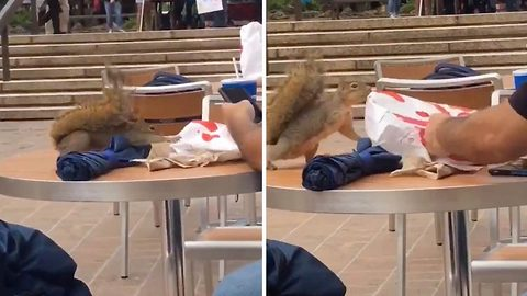 Hilarious moment squirrel fights human over Chick-fil-A fast food meal