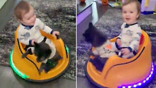 Kid and dog riding bumper car head to bed in style
